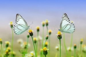 גן הפרפרים בדובאי